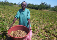 ZIMBABWE GETS US$7m AGRICULTURAL BOOST