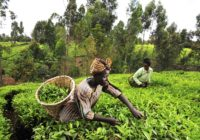 AfDB offers Ghana Agricultural sector US$60m loan