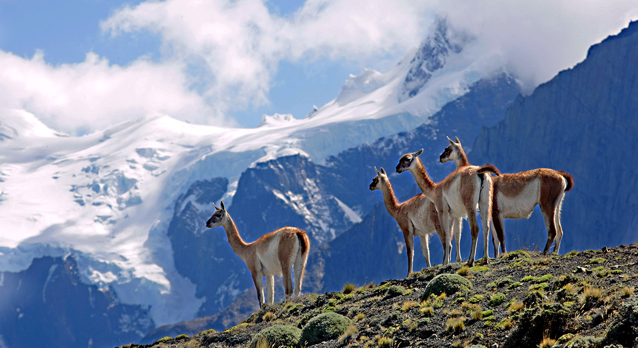 Patagonia South America >> PATAGONIA - Gambeta News