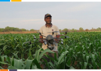 MICROSOFT PARTNERS WITH TECHNO BRAIN TO IMPROVE FARMERS YIELDS