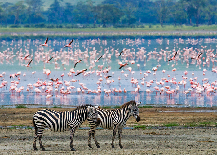 The great migration and beautiful wildlife