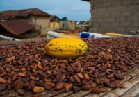 WORLD BANK TO INVEST US$300M INTO GHANA COCOA INDUSTRY