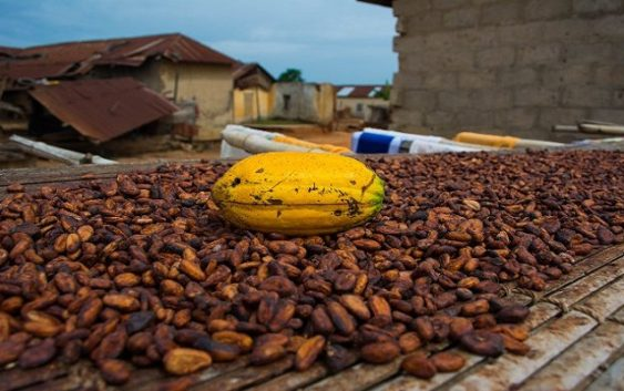 ghana cocoa world bank