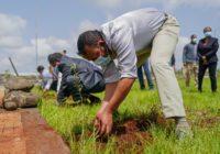 ETHIOPIA TO PLANT 5 BILLION TREES DESPITE THE COVID-19 CHALLENGES
