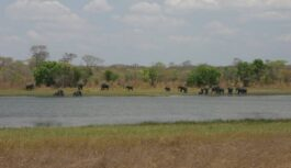 GOVT. CUTS 75% ON PARK ACCOMMODATION FEE IN MALAWI